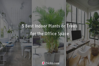 5 Best Indoor Plants or Trees for the Office Space
